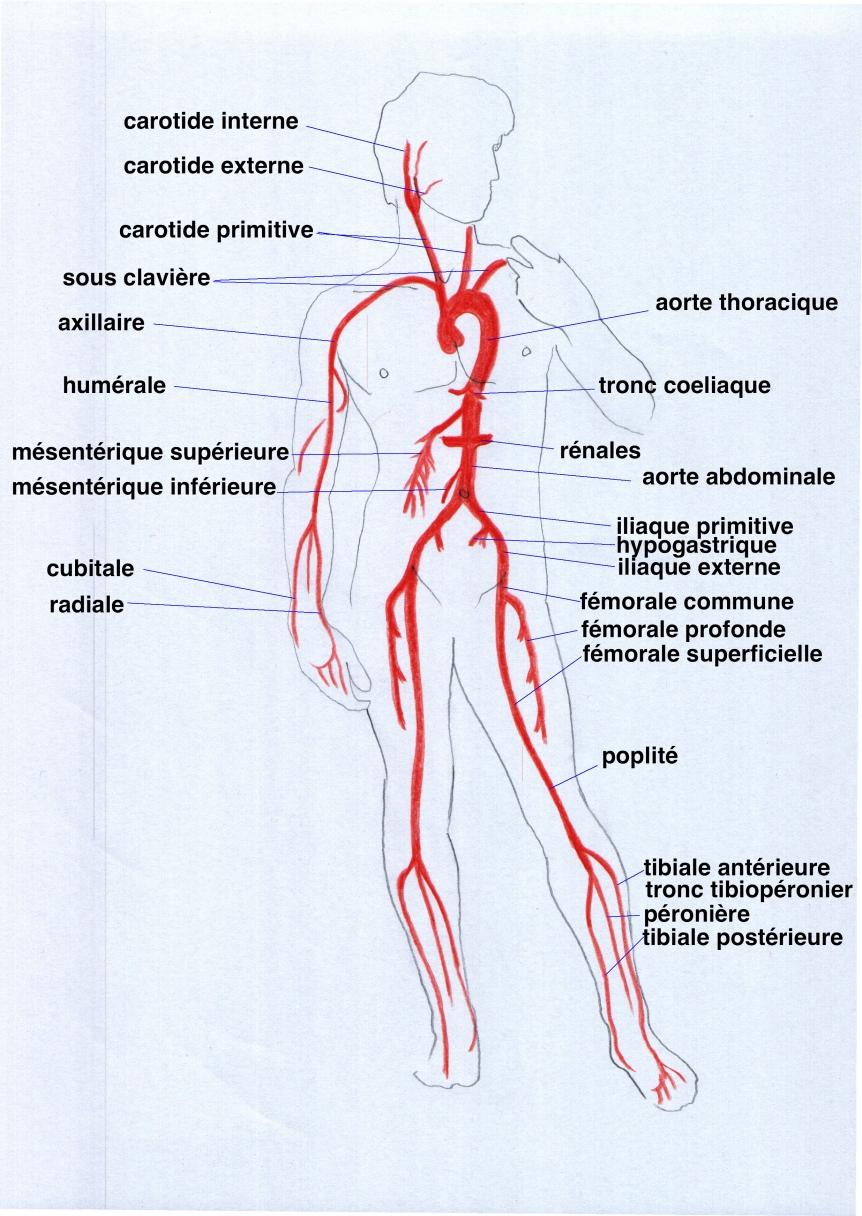 Les cliniques selon laugmentation du membre volgograd